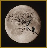 Mystic Stitch - By The Light Of The Moon Cross Stitch Chart