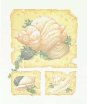 Parchment Shells II